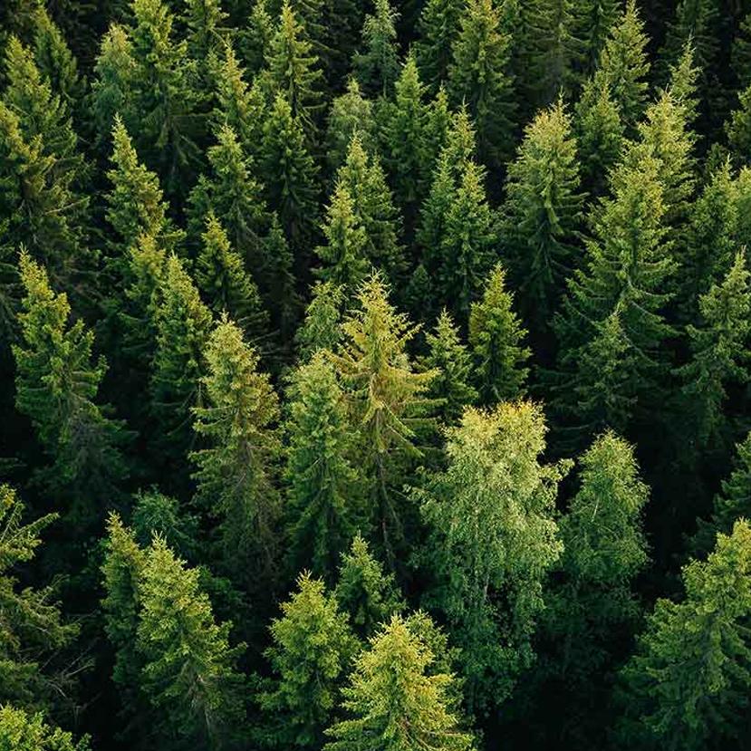 Kétmilliárd forinttal több forrás jut erdőtelepítésre