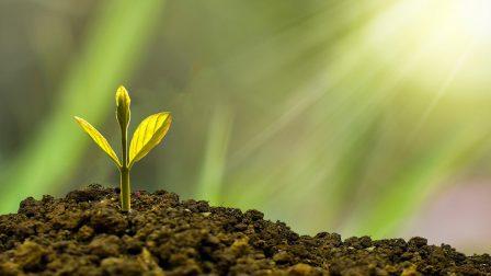 növény hajtás
