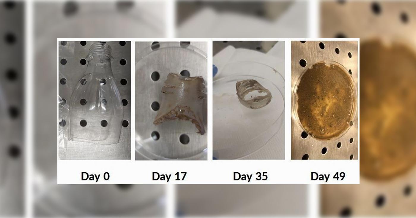 Fiatal magyar kutatók startupja baktériumokkal bontja a műanyaghulladékot