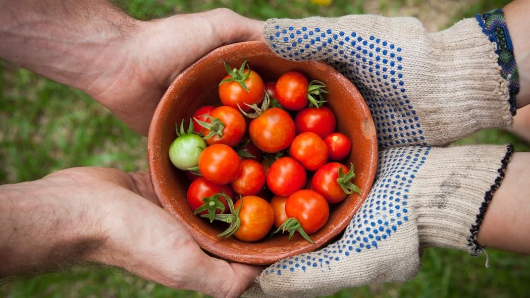 Kiskertészek a nagyvárosban – közösségi kertészkedés Budapesten