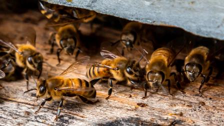 méhész 16-9