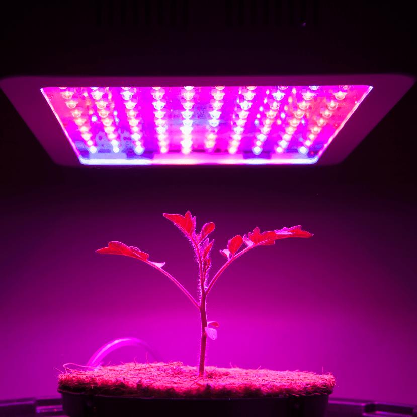 LuminanCity