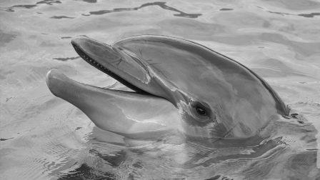 Idén 31  állatfaj halt ki -IUCN vörös lista