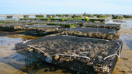 oyster-farm-1404177_1920