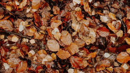 pexels-flora-westbrook-3326241_1400_t