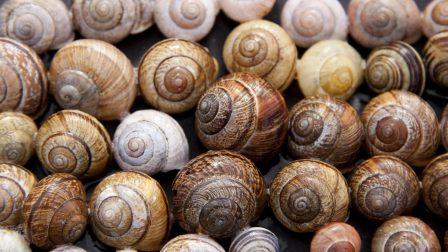 snail-65358_1920