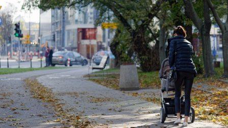 Kiemelkedően fontosak a városi fák az egészségünk védelmében