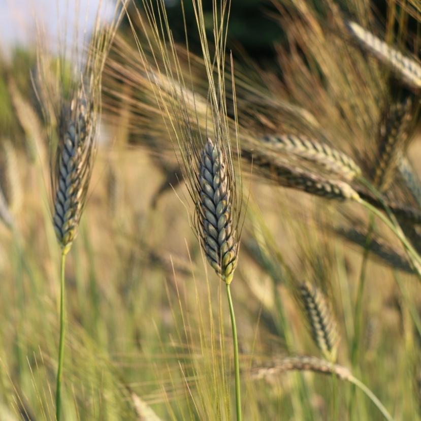 Komoly potenciál rejlik a hazai biogazdálkodásban