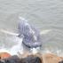 Hatalmas bálnatetemet emeltek ki a Földközi-tengerből