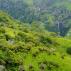 A klímaváltozás lassan átrajzolhatja trópusi esőerdők határait