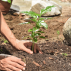 Az Ecosia 1 milliárd fát ültet Afrikában