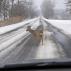 Vezessünk fokozott óvatossággal a vadak miatt!