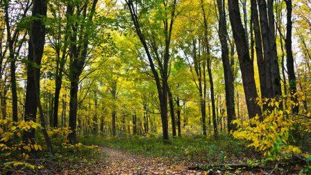 Egyre tisztábbak az erdők a Tisztítsuk meg az országot! programnak köszönhetően