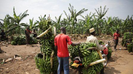 uganda-5005579_1920