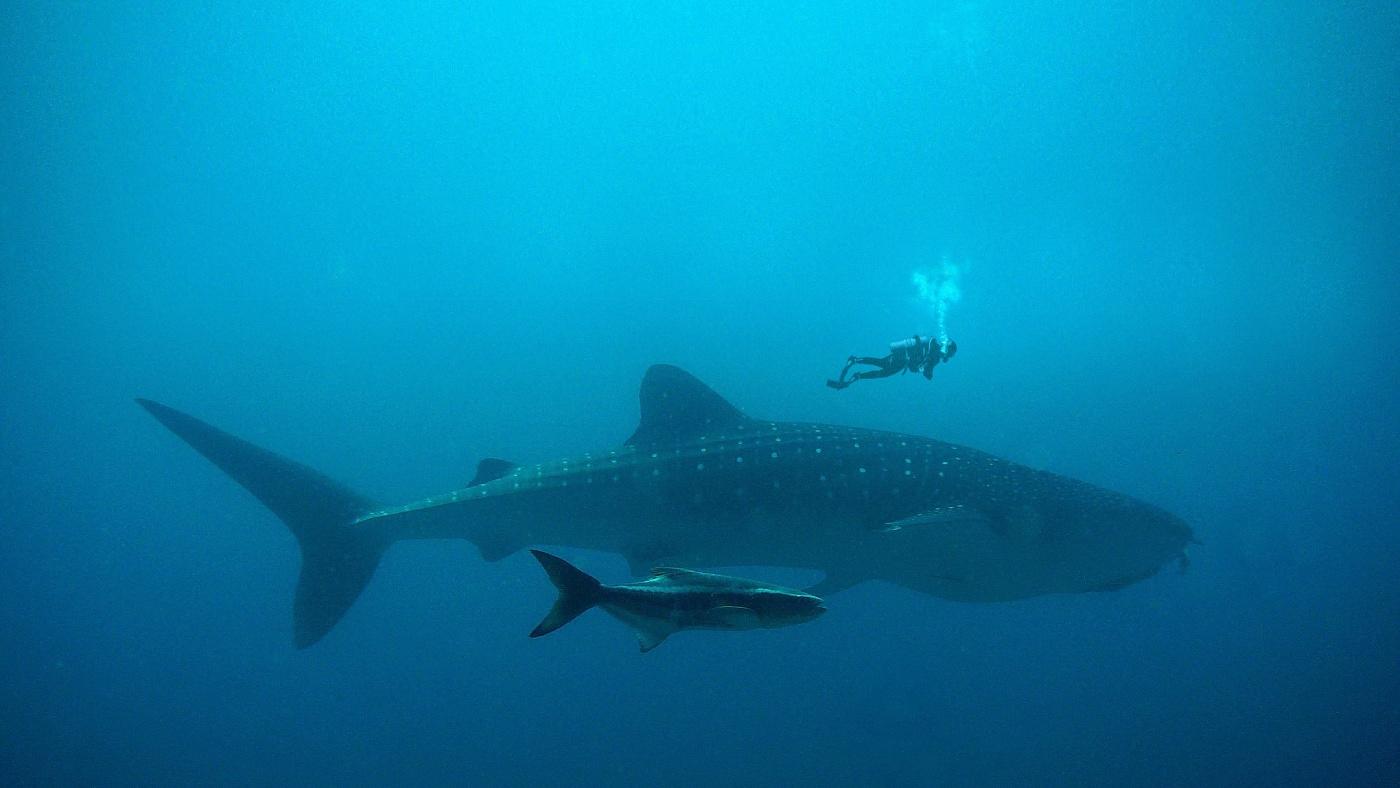 A halak is segítenek a szén-dioxid megkötésében