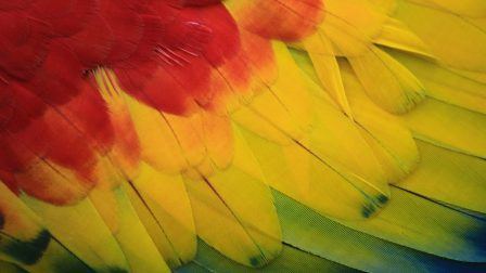 Veszélyben van a papagájok közel kétharmada