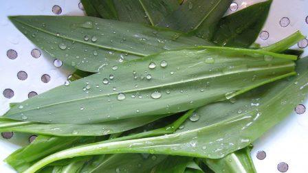 wild-garlic-1