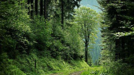 erdő-1