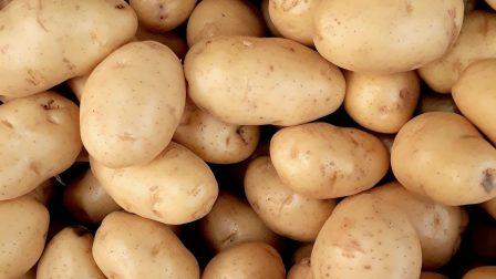krumpli-1
