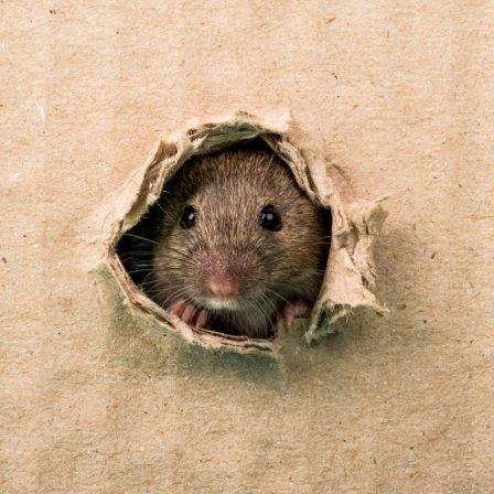 Ne mérgezz, védekezz természetesen a patkányok ellen!