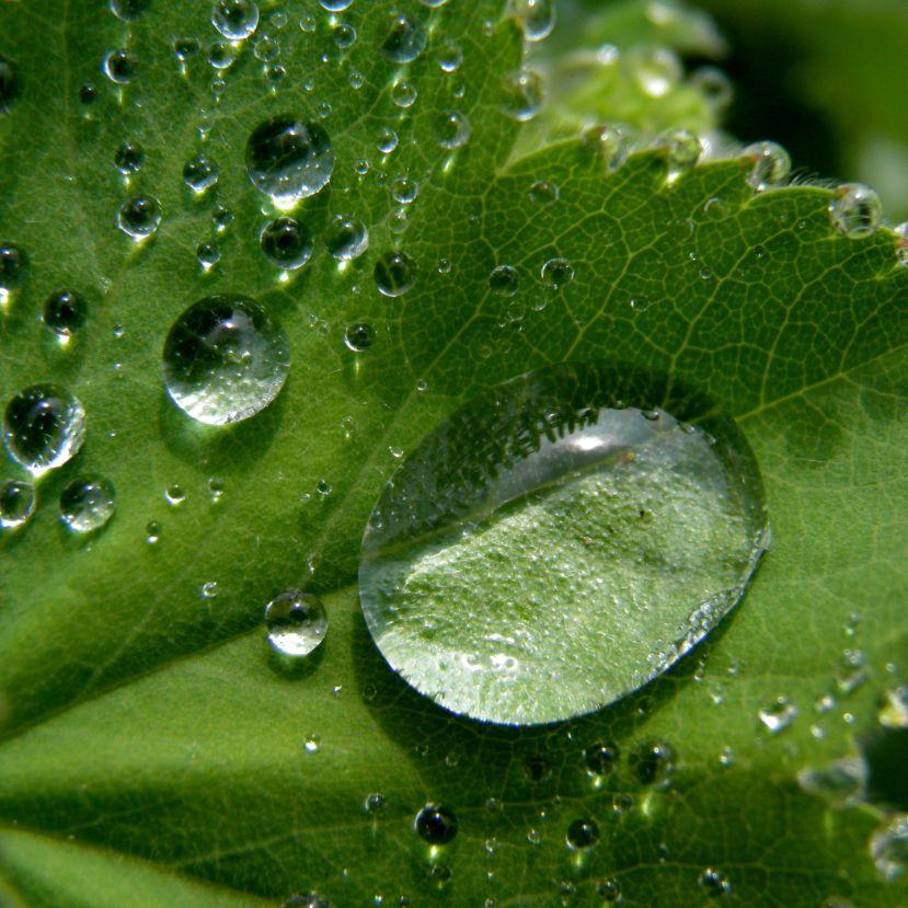 Minden csepp számít: 5 esővíz hasznosítási tipp