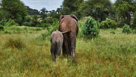1400x788pexels-lachcim-kejarko-elefántok