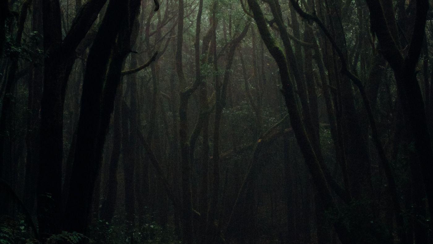 Brazília külföldi támogatással mentené meg az Amazóniai esőerdőt