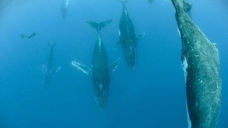 bálnák