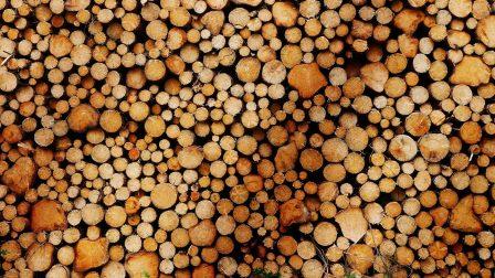 biomasszafa-1