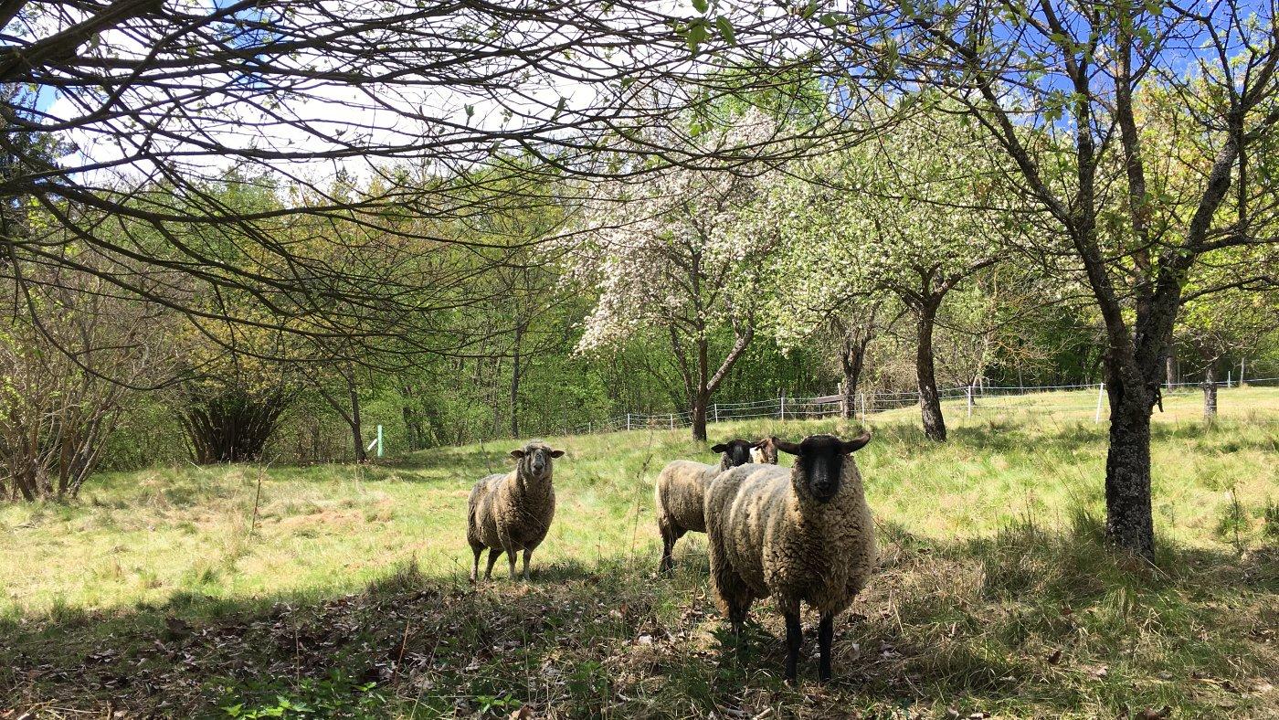 A kezdő vidéki tavaszi naplója