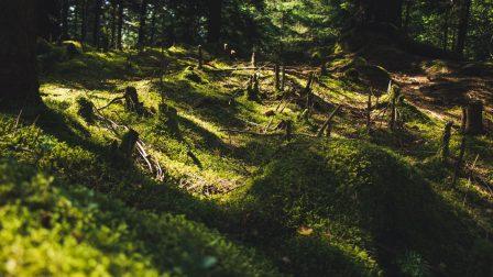 erdőirtás-1