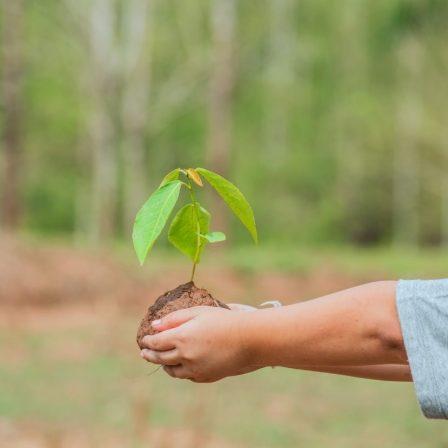 Az MNB a WWF Magyarországgal együttműködve válik karbonsemlegessé