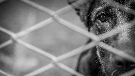 kutya állatvédelem