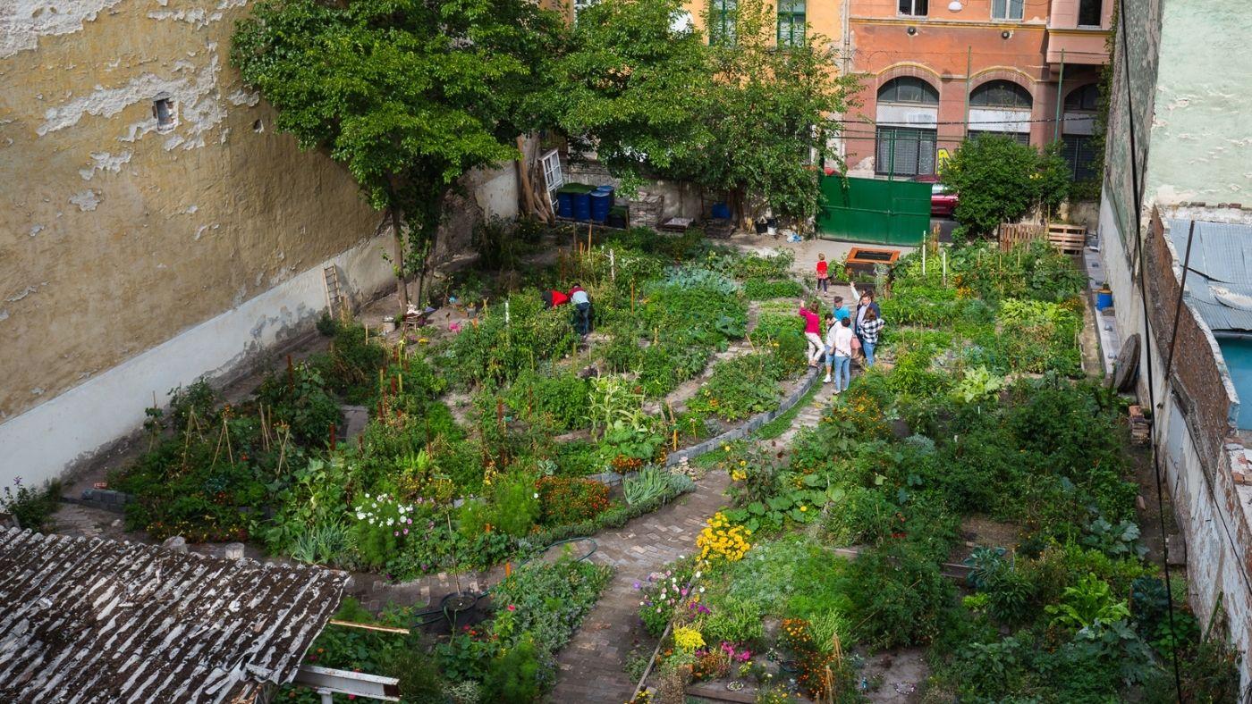 Tegyünk együtt a városi zöldfelületek növekedéséért!