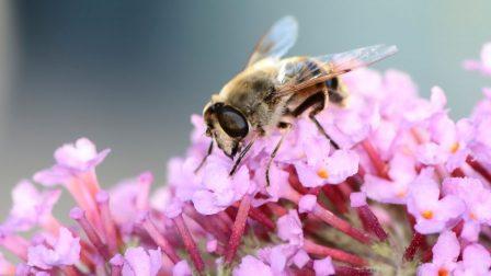 méh_beporzó