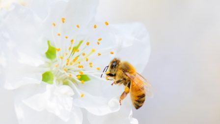 méhek(1)