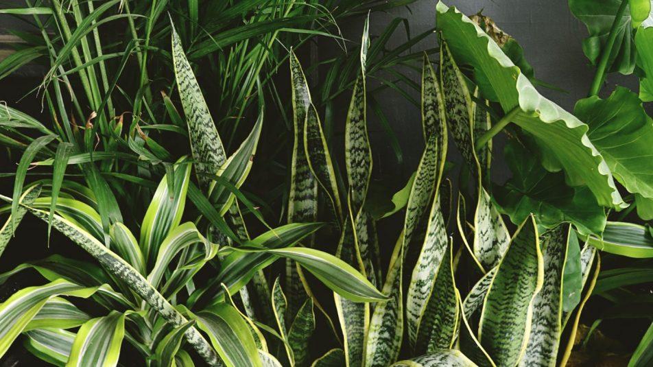 szobanövények_cover