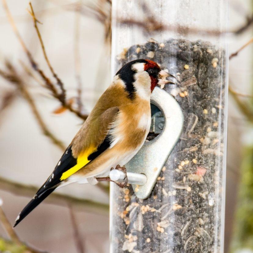 Lassan eljön az ideje a téli madáretetés befejezésének