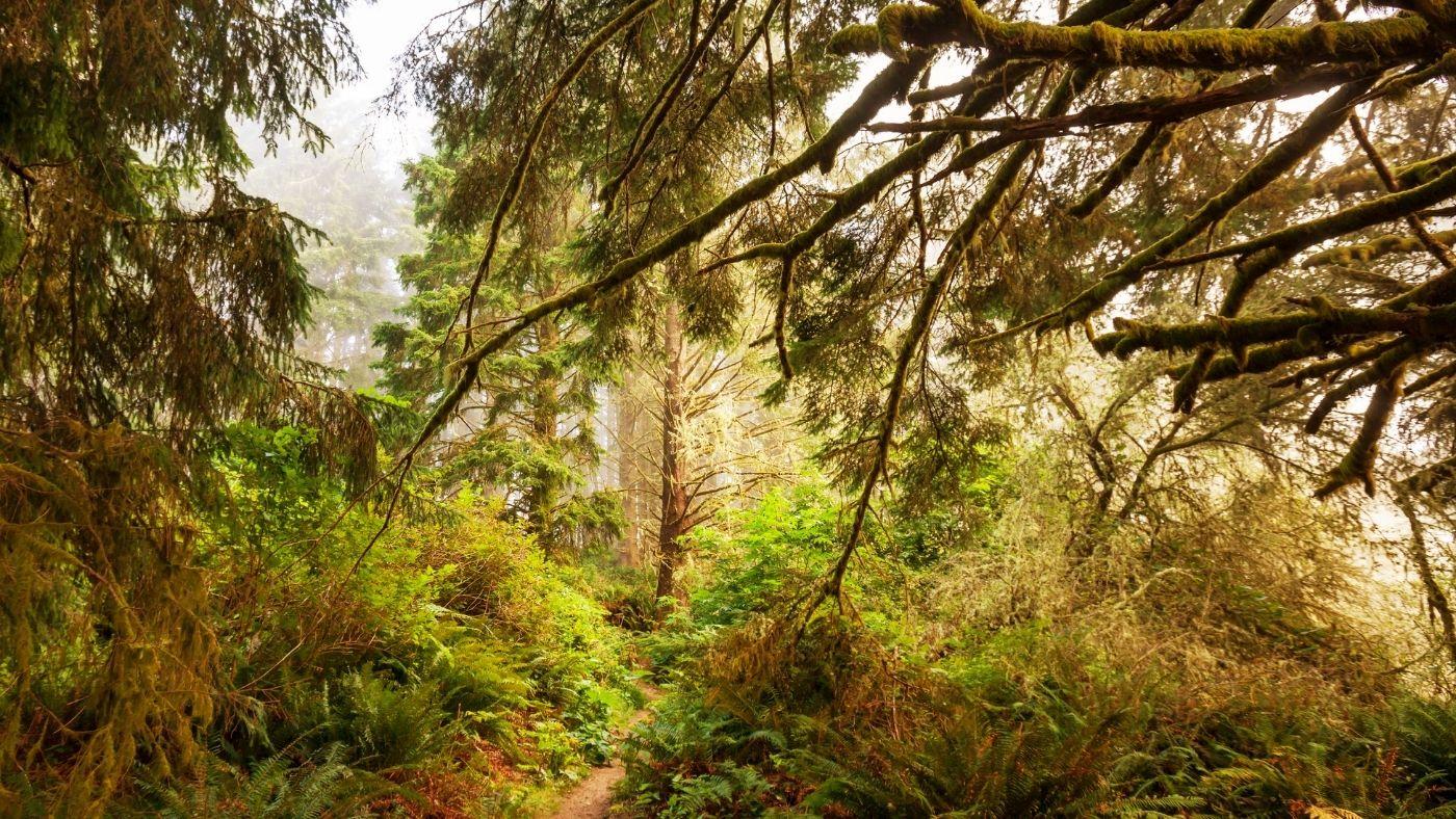 Így alakította át az erdők képét a dinoszauruszokat kipusztító aszteroida