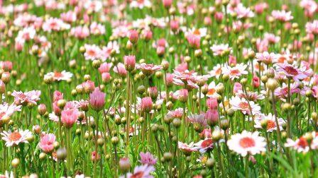 1400×788-virágok