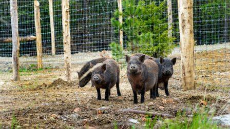 Hamarosan elkészül az Erdő Háza Ökoturisztikai Látogatóközpont