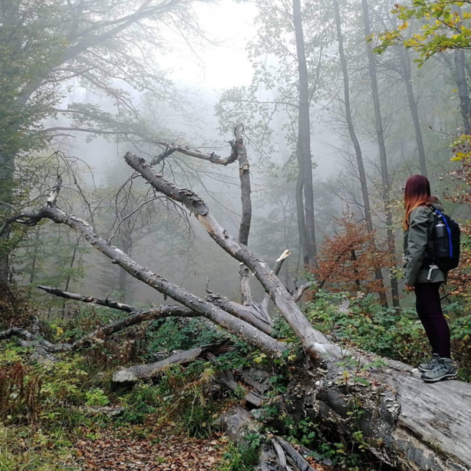 ember fa erdő