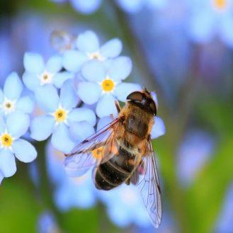 méh és légy