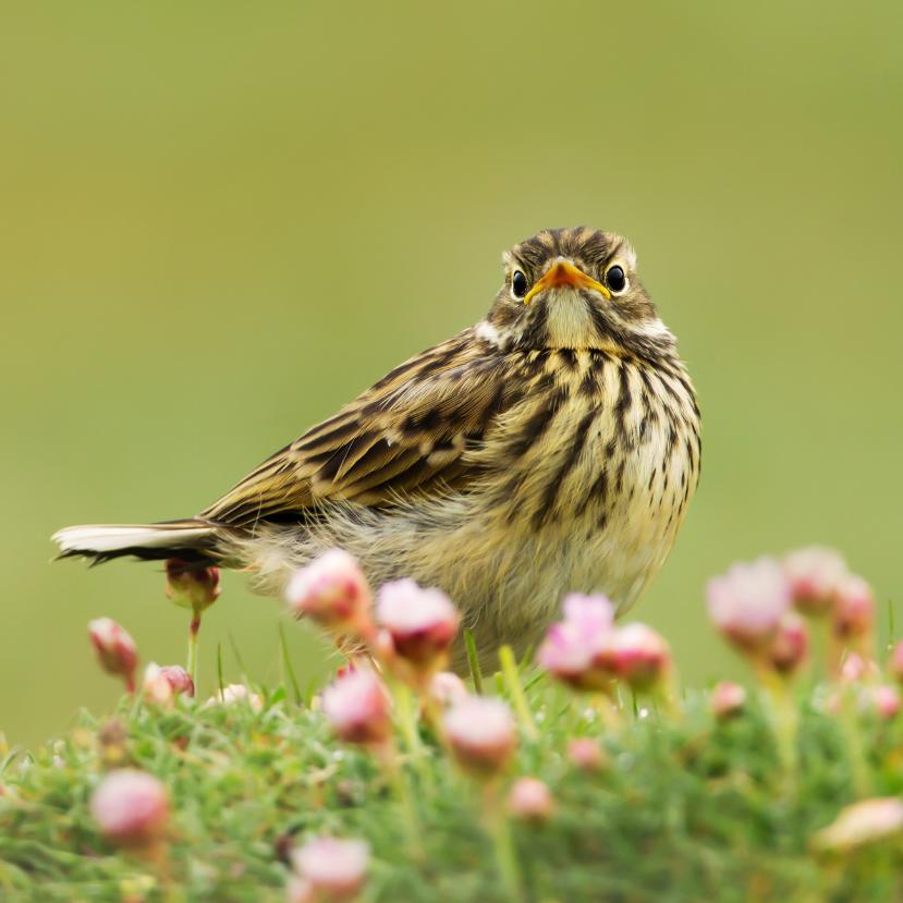 Biodiverzitás – Mit veszíthetünk a csökkenésével?