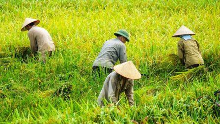 ázsiai farmerek