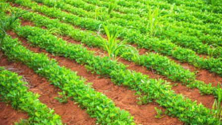 afrika mezőgazdaság