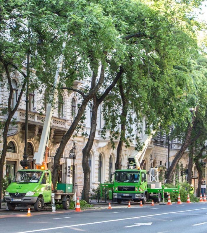 Városi fák a frontvonalban