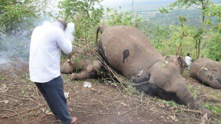 halott elefánt_borító