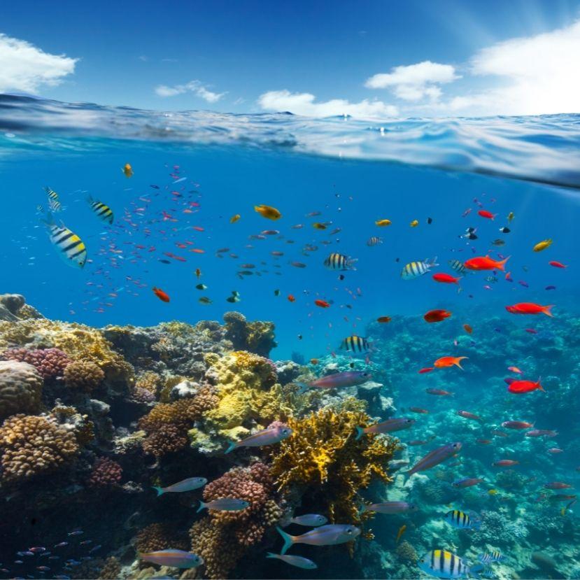 Műholdról figyelik a korallzátonyok változását