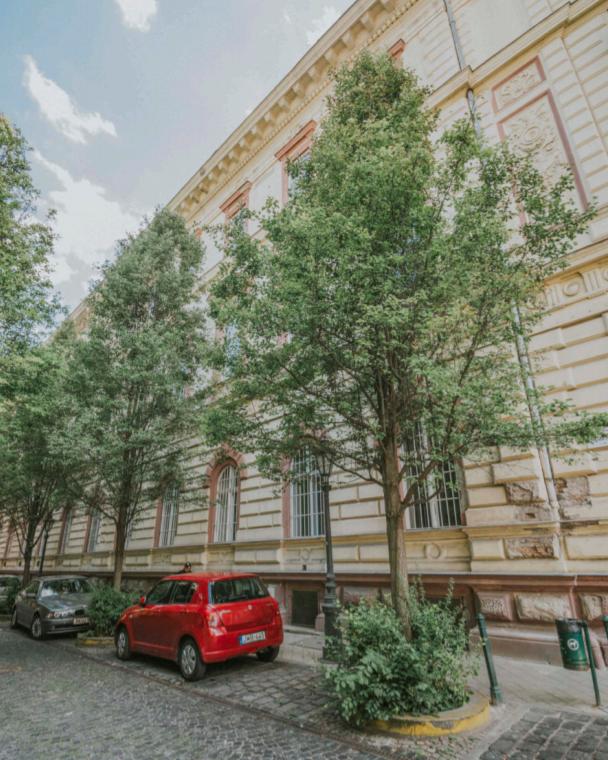 díszkörte városi fák